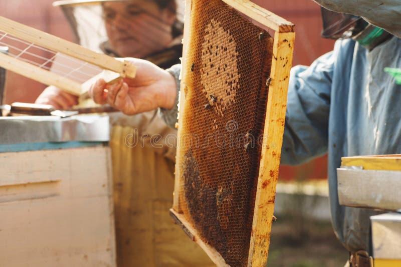 Рамки крапивницы пчелы Beekeeper жать мед Курильщик пчелы использован для того чтобы утихомирить пчел перед удалением рамки стоковое фото rf