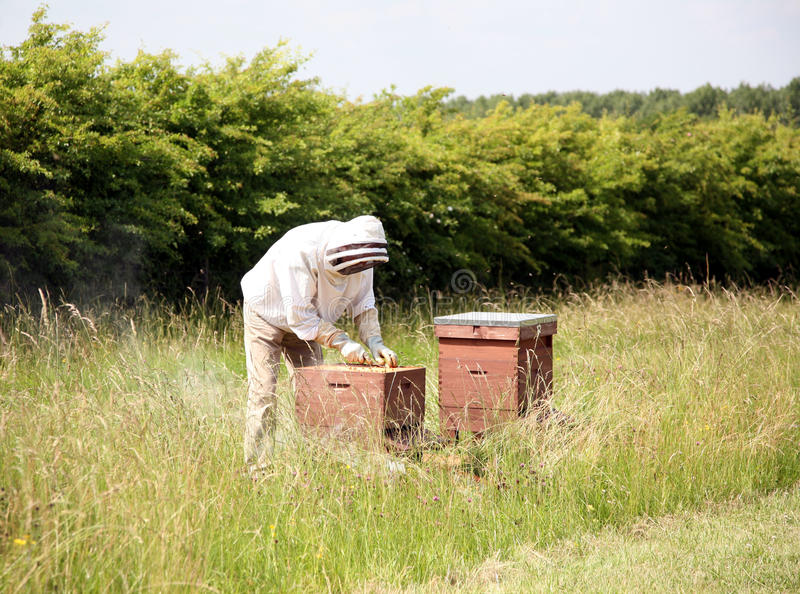 Download Beekeeper stock image. Image of honeycomb, nest, insect - 14991395
