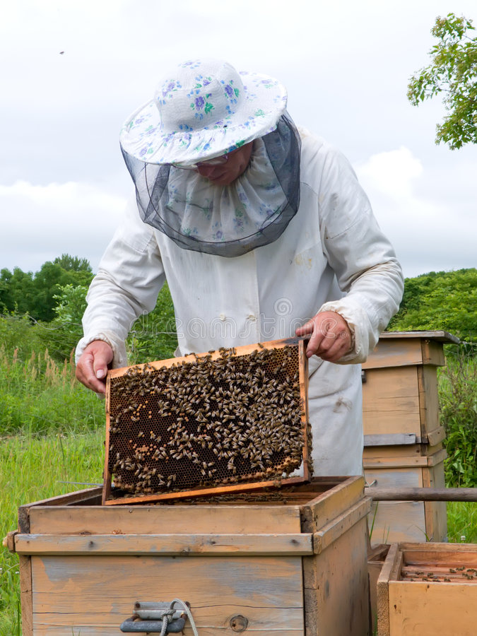 beekeeper 15 стоковые изображения
