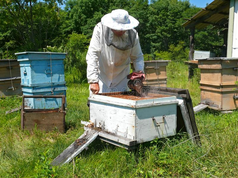 Beekeeper 24 royalty free stock photo
