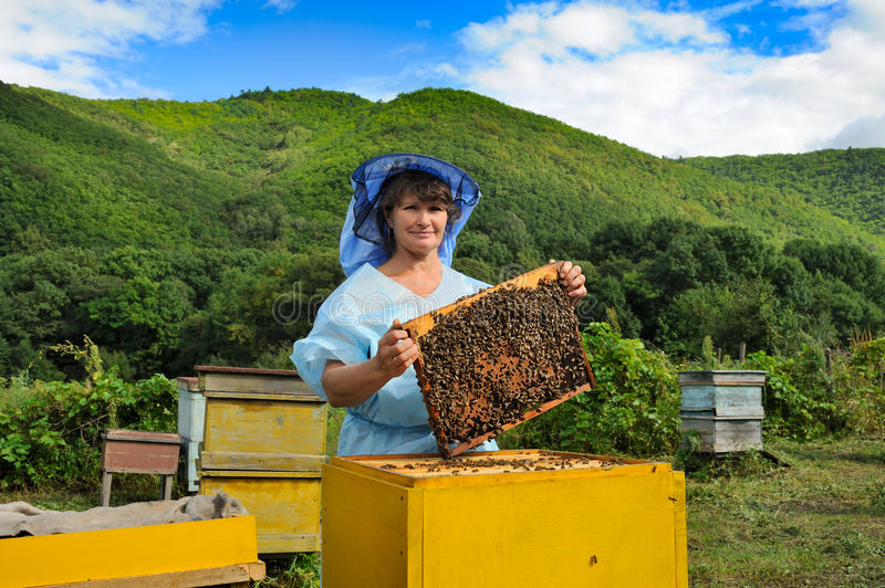 Download Beekeeper stock image. Image of frame, conservation, farm - 26644161