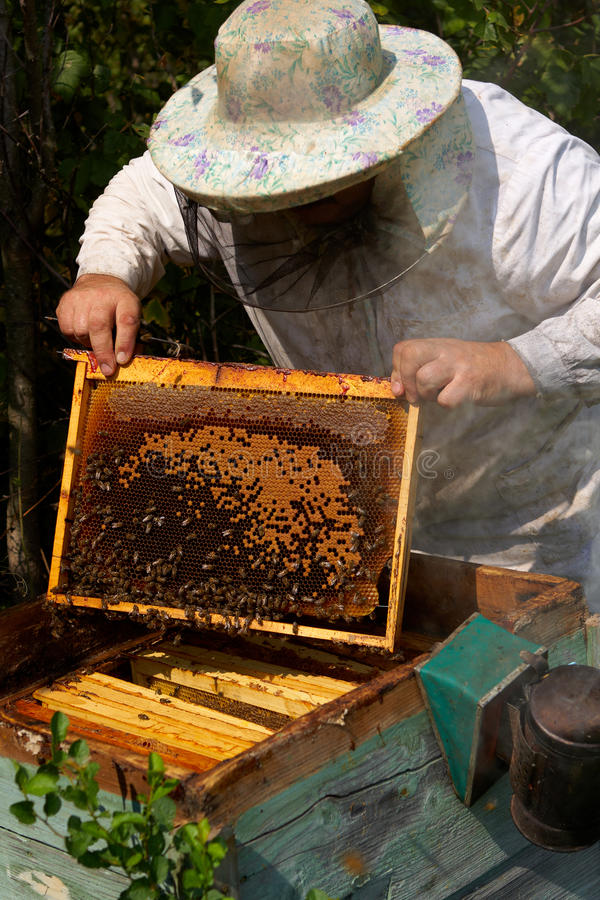 Download Beekeeper Royalty Free Stock Photo - Image: 28862845