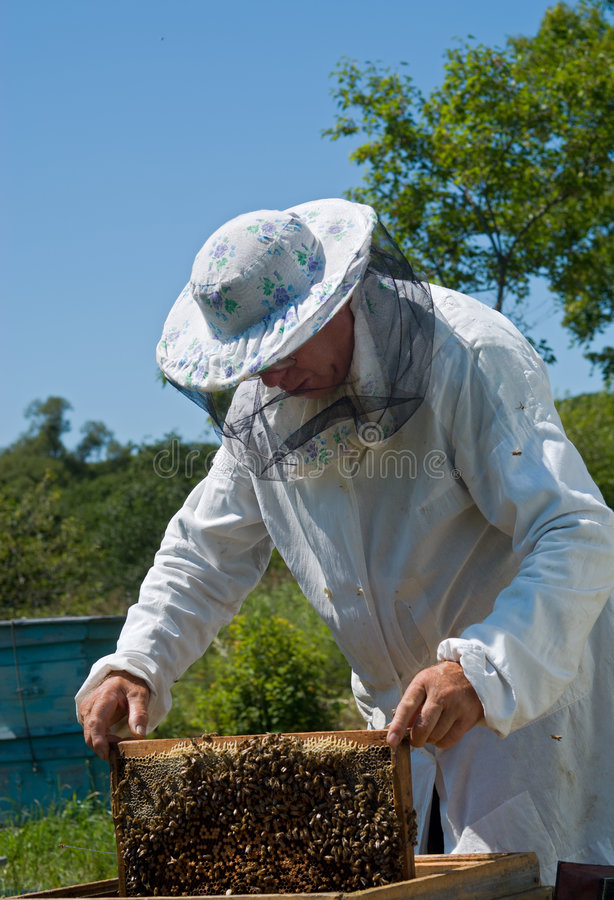 beekeeper 41 стоковое фото rf