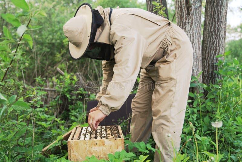 beekeeper fotografia de stock