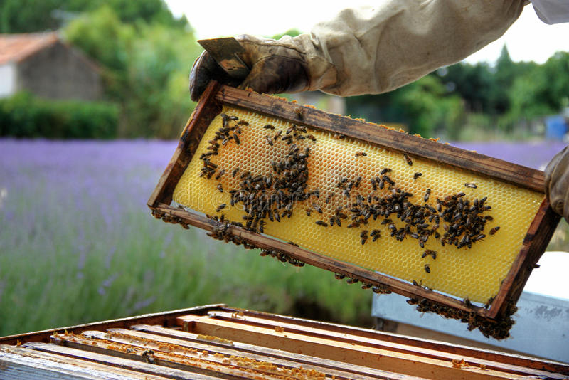 beekeeper imagem de stock royalty free