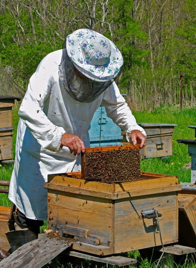 beekeeper 6 стоковое изображение
