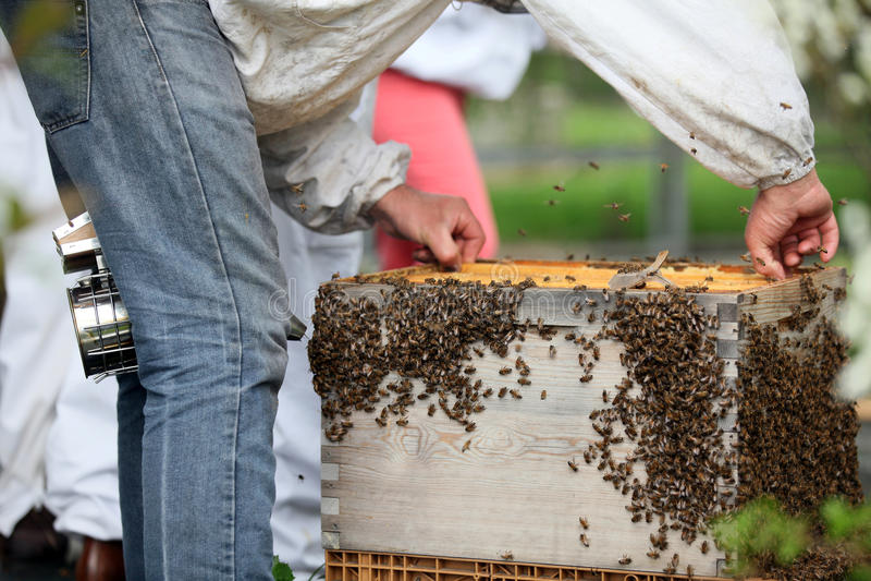 beekeeper imagens de stock royalty free
