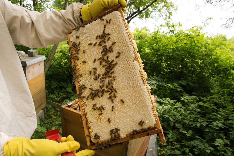 beekeeper imagem de stock