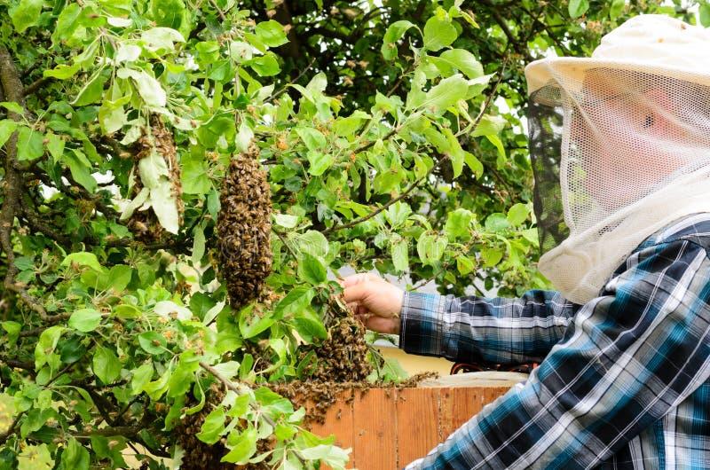 beekeeper fotos de stock