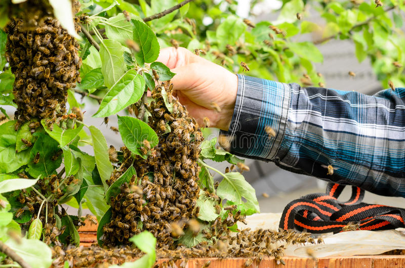 beekeeper fotografia de stock royalty free