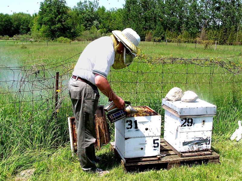 Download Beekeeper стоковое изображение. изображение насчитывающей отделенного - 84649