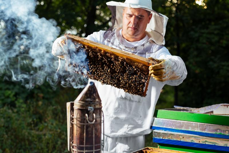 Beekeeper on apiary. Beekeeper is working with bees and beehives on the apiary. royalty free stock photos