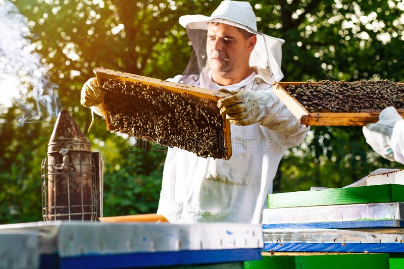 Beekeeper on apiary. Beekeeper is working with bees and beehives on the apiary. royalty free stock images
