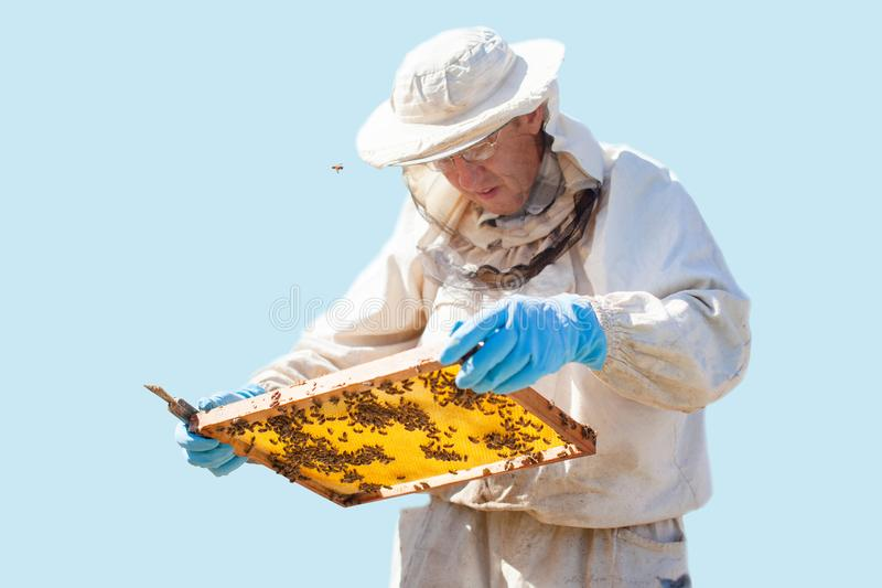 Beekeeper is working with bees and beehives on the apiary. Beekeeper on apiary. isolated royalty free stock photo