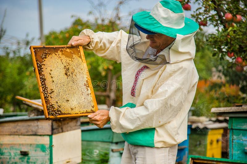 A beekeeper with a bee colony inspects. A beekeeper with a bee colony makes an inspection with his garden. Season of honey gathering royalty free stock photos