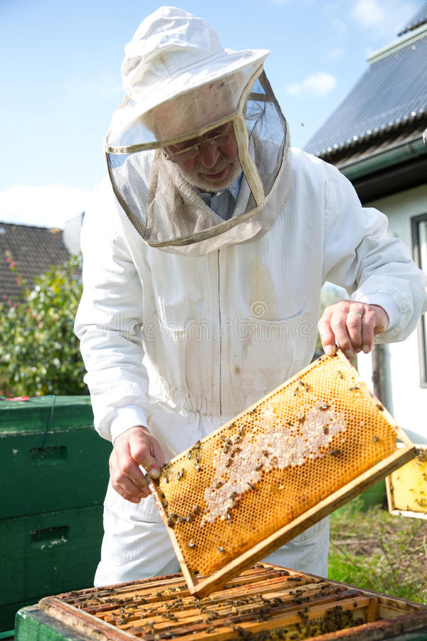 Beekeeper caring for bee colony royalty free stock photos