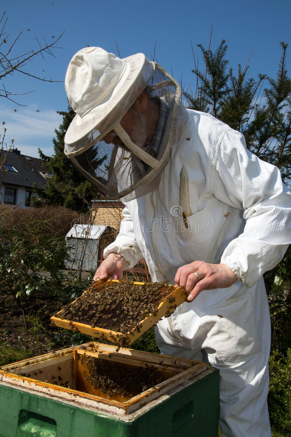 Beekeeper caring for bee colony. Beekeeper checking a beehive to ensure health of the bee colony or collecting honey royalty free stock image