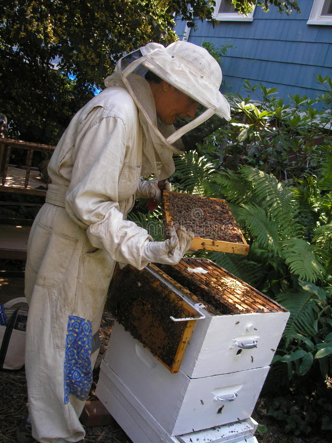 Download Beekeeper Checking Hive Stock Image - Image: 13876361