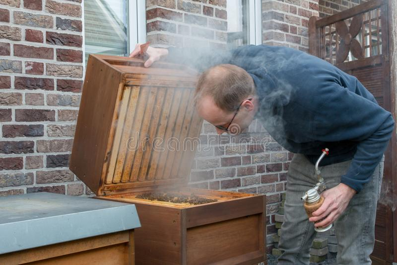 Beekeeper checks his bee colony using smoke. A apiarist looks into the beehive to check the size of his bee colony after the winter. He uses smoke to suppress royalty free stock photos
