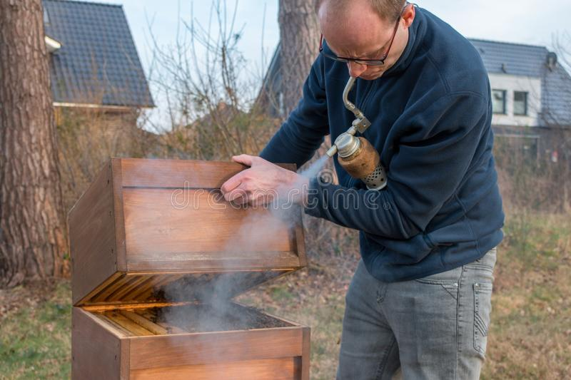 Beekeeper checks his bee colony using smoke. A apiarist looks into the beehive to check the size of his bee colony after the winter. He uses smoke to suppress royalty free stock image