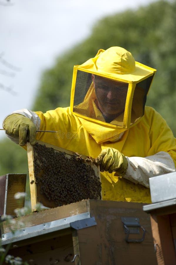 Download Beekeeper With Honeycomb stock image. Image of human - 26235983