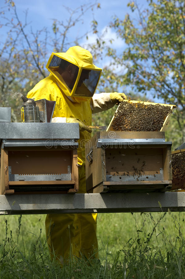 Download Beekeeper With Honeycomb stock photo. Image of scene - 26236332