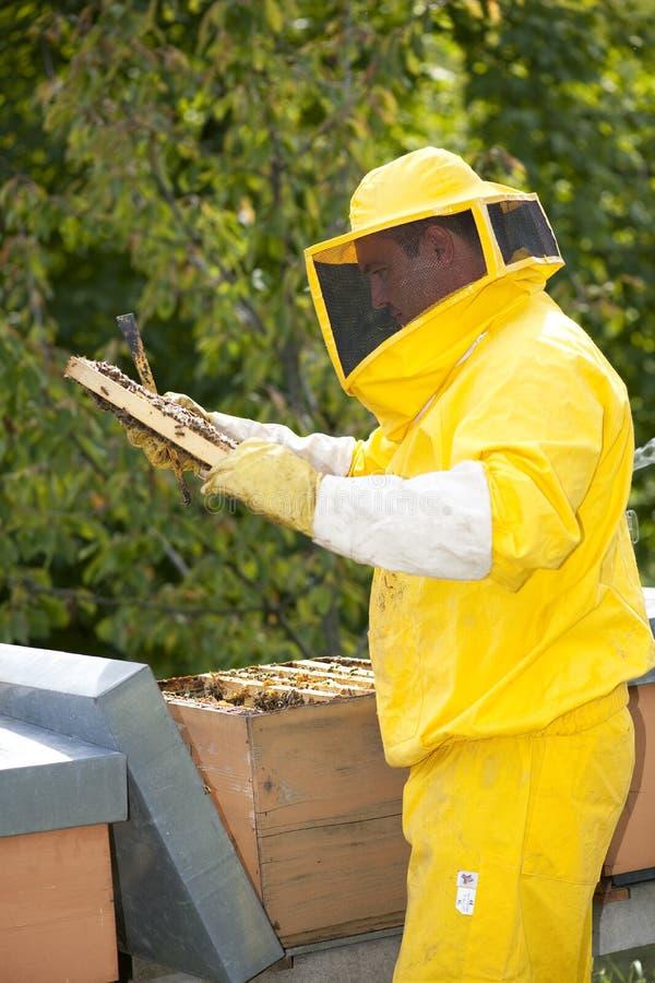 Download Beekeeper With Honeycomb stock image. Image of animal - 26240305