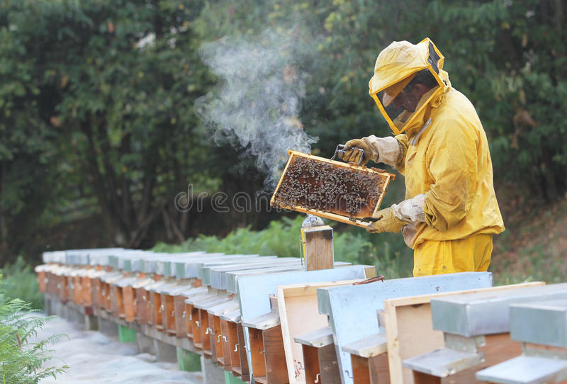 Beekeeper with honeycomb in hand royalty free stock image