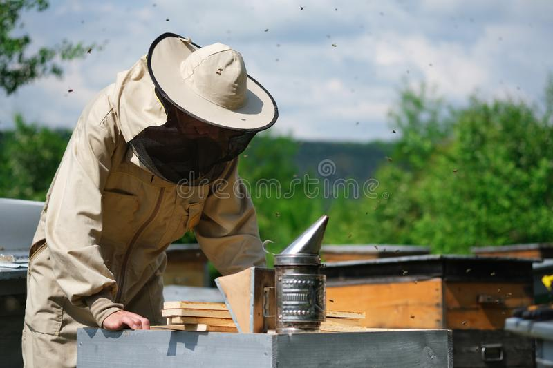 Beekeeper inspecting honeycomb frame at apiary at the summer day. Man working in apiary. Apiculture. Beekeeping concept. stock photography