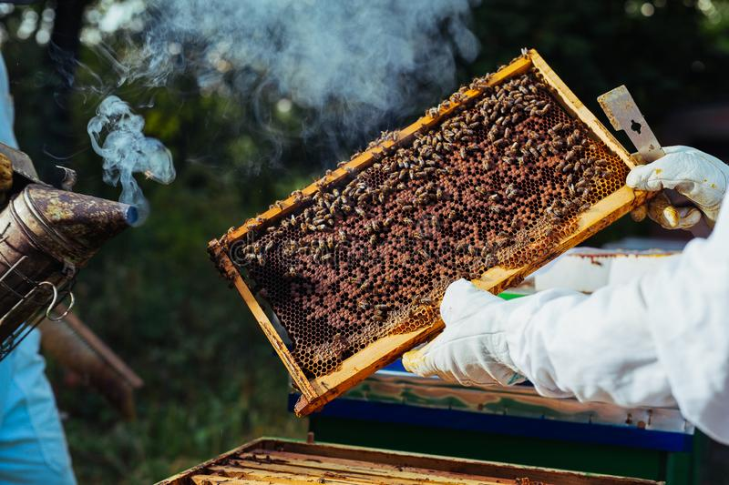 Beekeeper inspecting honeycomb frame at apiary. royalty free stock photos