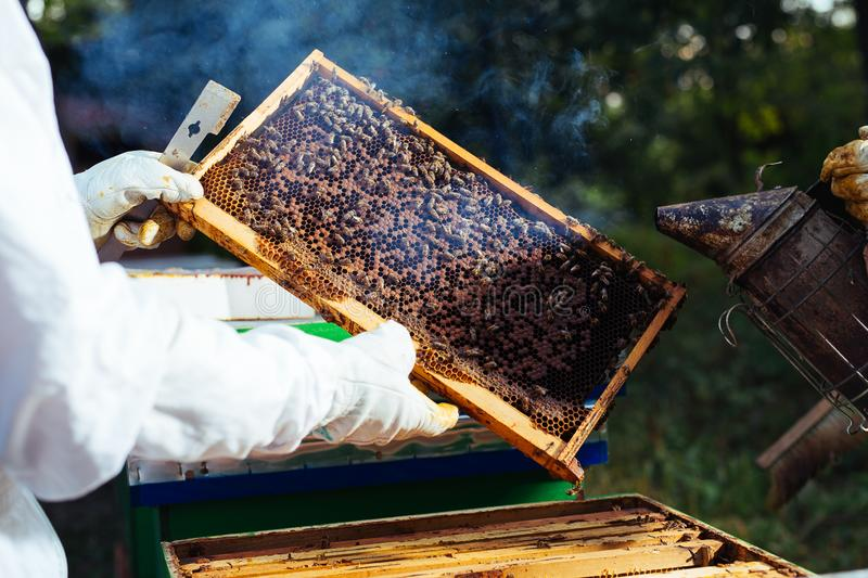 Beekeeper inspecting honeycomb frame at apiary. royalty free stock photo