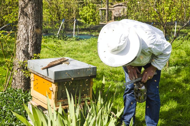 The beekeeper looking at the bee to the hive. Care of bees in the apiary royalty free stock images