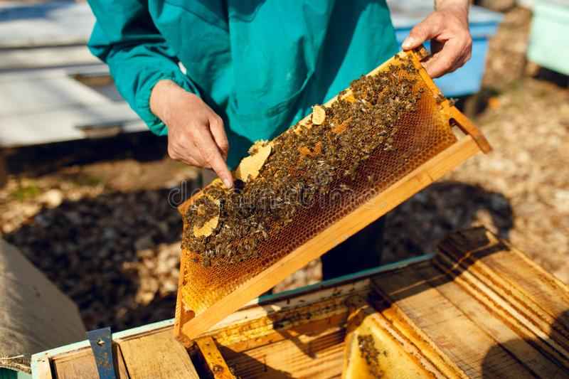 Cropped view of a beekeeper looking at a honeycomb, on hives background. Horizontal outside shot. stock photos