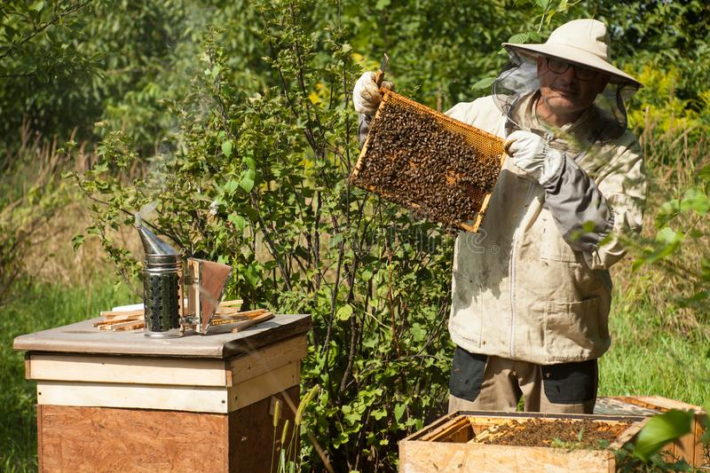 The beekeeper looks at the beehive. Honey collection and bee control. royalty free stock photos