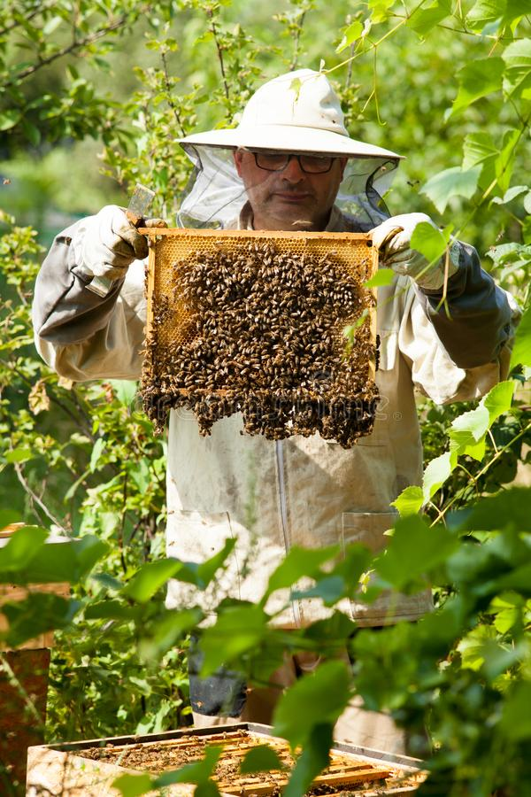 The beekeeper looks at the beehive. Honey collection and bee control. stock photos