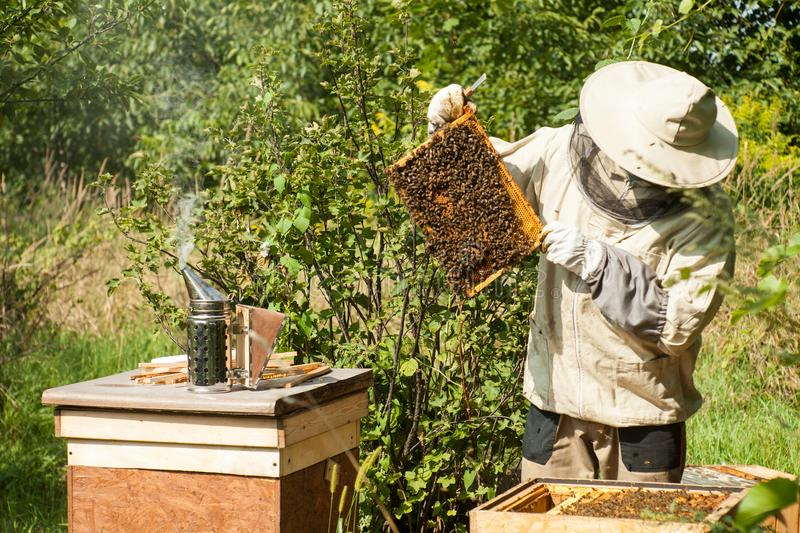 The beekeeper looks at the beehive. Honey collection and bee control. stock photography