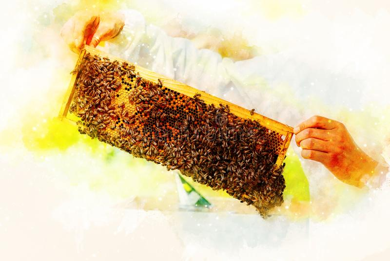 Beekeeper manipulating with honeycomb full of golden honey on softly blurred watercolor background. royalty free stock photography