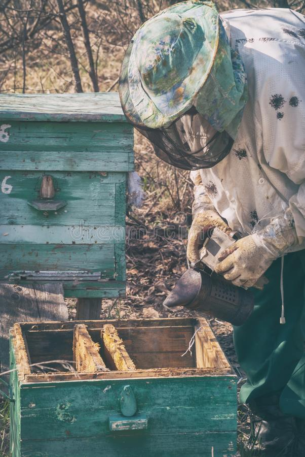 A beekeeper in a mask transplantes a family of bees in the spring to another beehive stock images