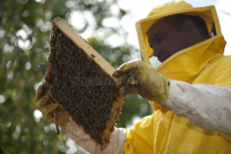 Beekeeper med honungskakan fotografering för bildbyråer