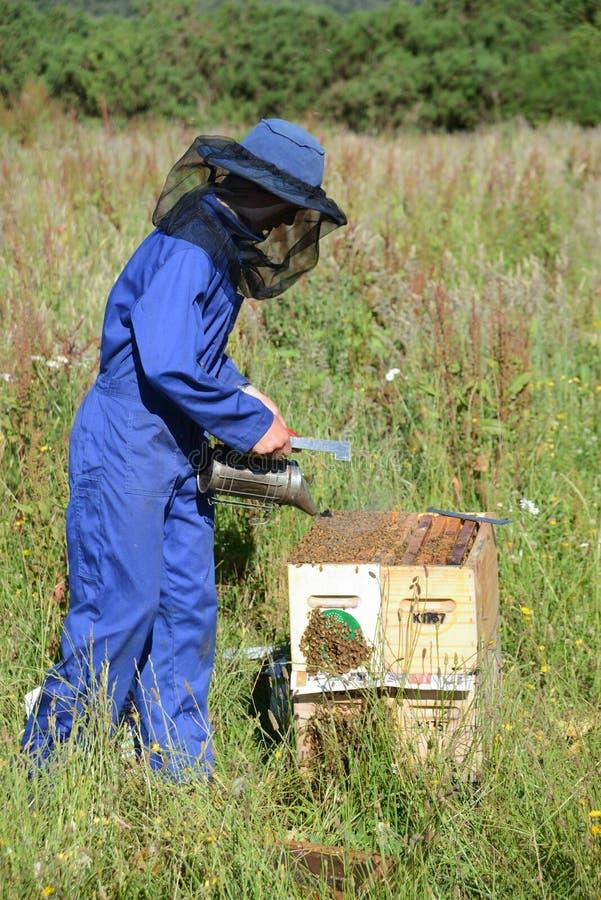 Beekeeper på arbete på en solig dag royaltyfria bilder
