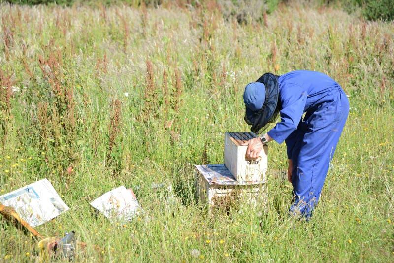 Beekeeper på arbete på en solig dag royaltyfri bild