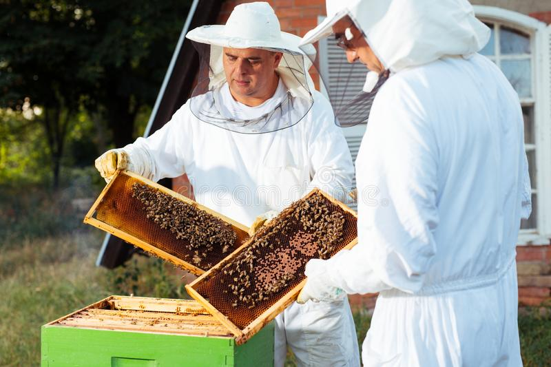 Beekeeper in protective work wear inspecting honeycomb frame at apiary. Young Beekeeper in protective work wear inspecting honeycomb frame at apiary royalty free stock photo