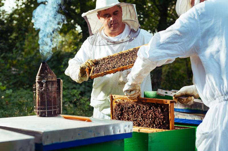 Beekeeper in protective work wear inspecting honeycomb frame at apiary. royalty free stock images