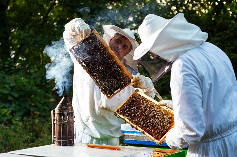 Beekeeper in protective work wear inspecting honeycomb frame at apiary. royalty free stock photography