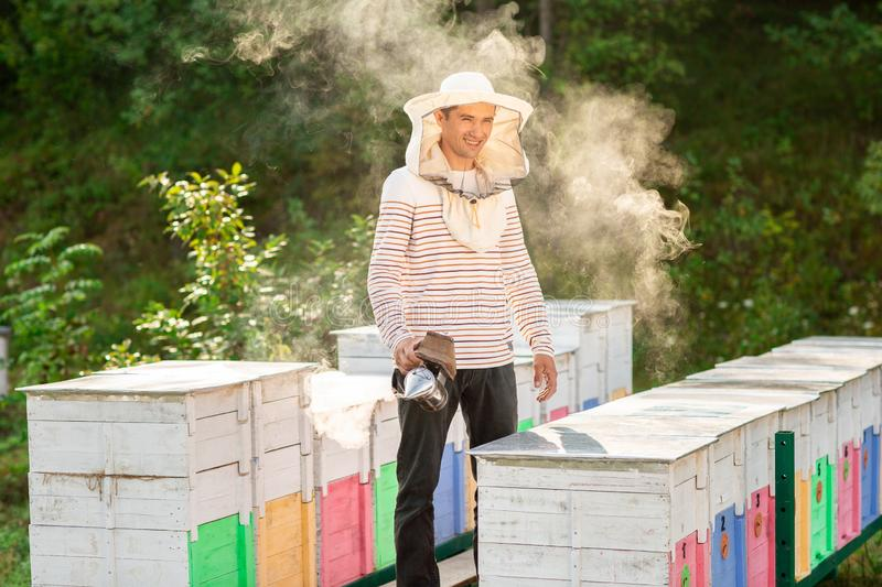 A beekeeper smokes bees in the process of collecting honey in wooden colored beehives. Beekeeping tool.  stock photo