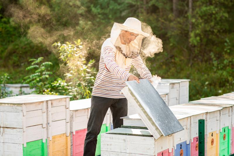 A beekeeper smokes bees in the process of collecting honey in wooden colored beehives. Beekeeping tool.  stock images