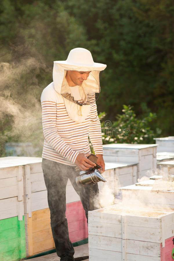 A beekeeper smokes bees in the process of collecting honey in wooden colored beehives. Beekeeping tool.  royalty free stock photography