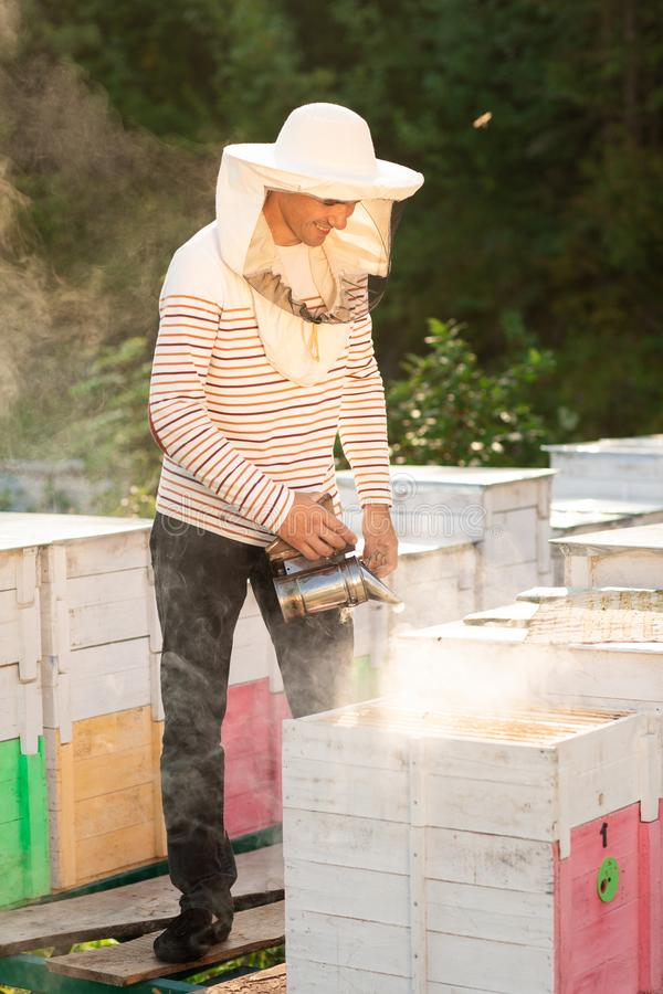 A beekeeper smokes bees in the process of collecting honey in wooden colored beehives. Beekeeping tool.  stock image