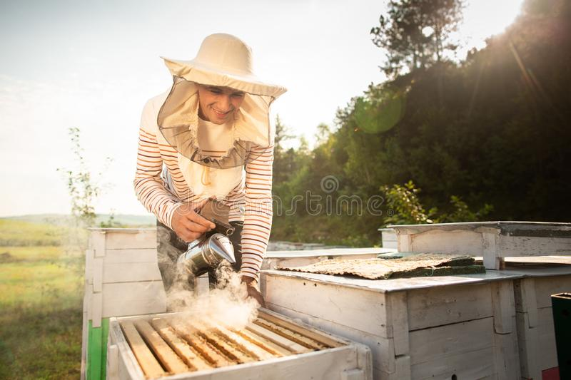 A beekeeper smokes bees in the process of collecting honey in wooden colored beehives. Beekeeping tool.  royalty free stock photo