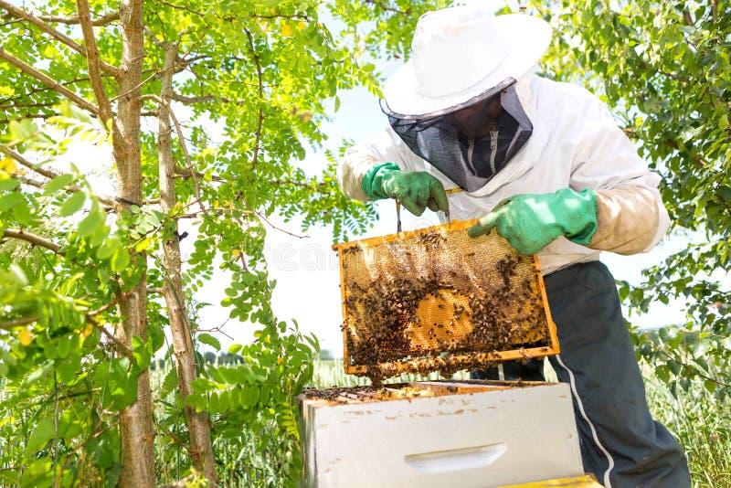 Beekeeper som arbetar på hans bikupor i trädgården arkivbild